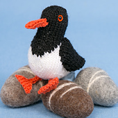 Oystercatcher_small_small_best_fit
