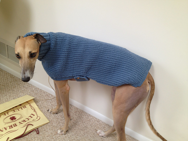 Ravelry Whippets And Greyhound Sweaters Pattern By Sandra Polley