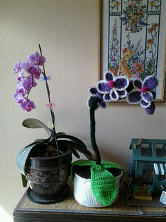 Orchids_small2