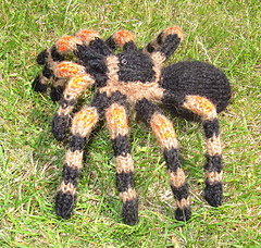 My_pet_tarantula3_small