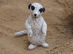 Meerkat_photos_0221_small