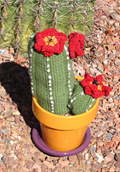 Fencepost_cactus_with_red_flowers_small_best_fit