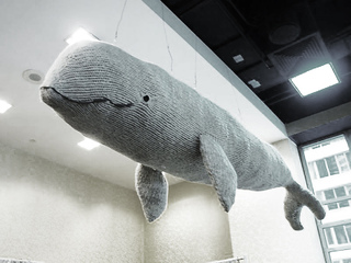 Whale-hannah_haworth_small2