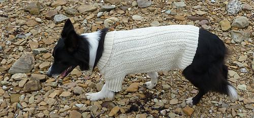 Sea_dog_gansey06_medium