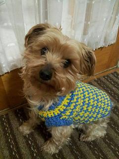 Ravelry Crochet Dog Sweater Pattern By Eleanor Miles Bradley