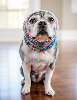b133da9fe0fc Ravelry  To humiliate the dog pattern by Amoena Online
