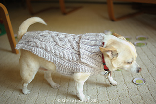 Ravelry Chihuahua Sweater Pattern By Staceyjoy Elkin