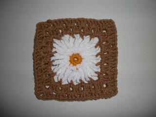 Daisy_square_small2