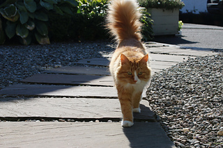 Fintrycat_small2